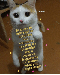 Beautiful, Memes, and Sorry: i luv u  hi sorry to  interrupt Ur  ascrolling  wanted to  say that ur  beautiful  and u  deserve  happiness  no matter  what you  might think positive-memes:Oh and btw u r amazing.
