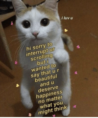 Beautiful, Memes, and Sorry: i luv u  hi sorry to  interrupt ur  scrolling  0  wanted to  say that ur  beautiful  and u  deserve  happiness  no matter  what you  a migt thinka https://t.co/pwisfLUJC5