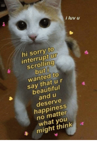 Beautiful, Sorry, and Happiness: i luv u  hi sorry to  interrupt ur  scrolling  but f  wanted to  say thatur  beautiful  and u  deserve  happiness  no matter  what youu  a migt thinka