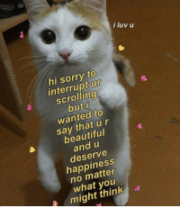 Beautiful, Sorry, and Wholesome: i luv u  hi sorry to  interrupt ur  scrolling  but i  wanted to  say that ur  beautiful  and u  deserve  happiness  no matter  what you  might think Wholesome catto