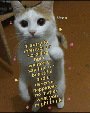 luv: i luv u  hi sorry to  interrupt ur  scrolling  but i  wanted to  say that u r  beautiful  and u  deserve  happiness  no matter  what you  might think  @derangedmeme