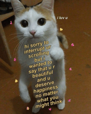 Happy Scrolling: i luv u  hi sorry to  interrupt ur  scrolling  but i  wanted to  say that u r  beautiful  and u  deserve  happiness  no matter  what you  might think  @derangedmeme Happy Scrolling