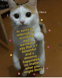 Beautiful, Memes, and Sorry: i luv u  hi sorry to  interrupt ur  scrollino  2  wanted to  say that ur  beautiful  and u  deserve  happiness  no matter  what youu  might think positive-memes:  i luv u