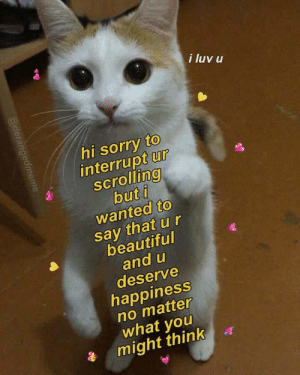 Beautiful, Memes, and Sorry: i luv u  hi sorry to  interrupt ur  scrollino  2  wanted to  say that ur  beautiful  and u  deserve  happiness  no matter  what youu  might think positive-memes:i luv u