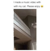 Memes, Music, and Video: I made a music video with  with my cat. Please enjoy I laughed way to much at this Credit: @morningstar300