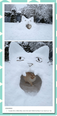"Meme, Tumblr, and Http: I made him a little kitty snow fort and I think he likes it as much as I do <p>Cat Snow Fort.<br/><a href=""http://daily-meme.tumblr.com""><span style=""color: #0000cd;""><a href=""http://daily-meme.tumblr.com/"">http://daily-meme.tumblr.com/</a></span></a></p>"