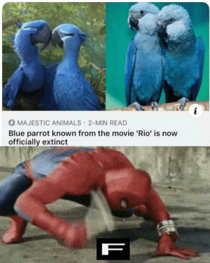 Animals, Dank, and Memes: i  MAJESTIC ANIMALS 2-MIN READ  Blue parrot known from the movie 'Rio' is now  officially extinct  .  F press f to pay respect by S0rrryM4nnn MORE MEMES