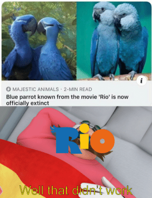 F-Mega: i  MAJESTIC ANIMALS 2-MIN READ  Blue parrot known from the movie 'Rio' is now  officially extinct  .  WWell that de  Work F-Mega