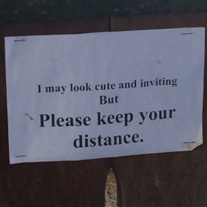 But Please: I may look cute and inviting  But  Please keep your  distance.  1
