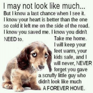 Memes, Heart, and Home: I may not look like much...  But I know a last chance when I see it  I know your heart is better than the  so cold it left me on the side of the road.  I know you saved me. I know you didn't  Take me home  I will keep your  feet warm, your  kids safe, and I  will never, NEVER  forget you gave  a scruffy little guy who  didn't look like much  NEED to  AFOREVER HOME.