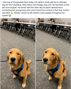 doggos-with-jobs:Andy is a Therapy Dog with the Columbus, Ohio Police department: I met one of the goodest boys today. His name is Andy and he is a therapy  dog for the Columbus, Ohio Police new therapy dog unit. He has been on the  job since August. His owner said the other day he spent several hours  comforting two young boyss who came home from school to find their mother  100/10, I know he will comfort many people throughout his  had died.  career! doggos-with-jobs:Andy is a Therapy Dog with the Columbus, Ohio Police department