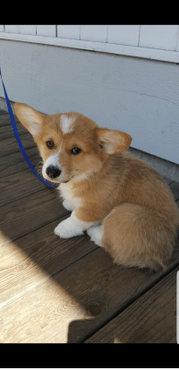 Corgi, Time, and Vacation: I met the cutest corgi while on vacation. It's the first time I ever got to pet one before.