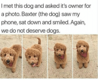 <p>11/10 would pet</p>: I met this dog and asked it's owner for  a photo. Baxter (the dog) saw my  phone, sat down and smiled. Again,  we do not deserve dogs. <p>11/10 would pet</p>