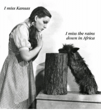 Africa, Funny, and Kansas: I miss Kansas  I miss the rains  down in Africa Don't we all