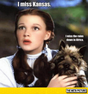 laughoutloud-club:  What About You Toto?: I miss Kansas.  I miss the rains  down in Africa.  THE META PICTURE laughoutloud-club:  What About You Toto?