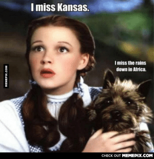 Hurry toto it's waiting there for youomg-humor.tumblr.com: I miss Kansas.  Imiss the rains  down in Africa.  CHECK OUT MEMEPIX.COM  MEMEPIX.COM Hurry toto it's waiting there for youomg-humor.tumblr.com