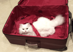 CoCo, Family, and Travel: I miss my family.... Coco is ready to travel to.... see ancestors in Persia.