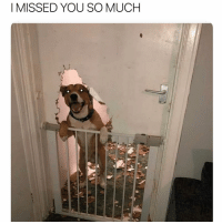 Bad, Memes, and Mad: I MISSED YOU SO MUCH If a dog wants to see you this bad can you even be mad? If @grumpybeagle are through the bathroom door to see me I'd prob give him a cookie. Discuss.