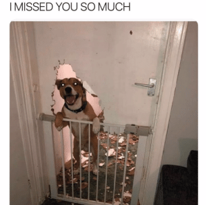 Bad, Mad, and Dog: I MISSED YOU SO MUCH If a dog wants to see you this bad can you even be mad?