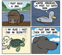 Alive, Memes, and Soon...: I MUST BUILD  A DAM...  I AM ALIVE. I MUST  FIND AN OCEAN  WINTER APROACHES.  SOON.  I MUST BARF AND  THEN EAT THAT BARE Do you what you must.