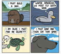 Alive, Memes, and Soon...: I MUST BUILD  A DAM...  I AM ALIVE. I MUST  FIND AN OCEAN???  WINTER APROACHES.  SOON.  I MUST BARF AND  THEN EAT THAT BARE