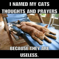 My useless pets: I NAMED MY CATS  THOUGHTS AND PRAYERS  BECAUSE THEY ARE  USELESS My useless pets