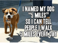"""Gym, Free, and Link: I NAMED MY DOG  """"5 MILES""""  SO I CAN TELL  PEOPLE WALK  5MILESETERIDAY Ingenious. . @DOYOUEVEN 👈🏼 TWO WORDS = FREE SHIPPING! 📦 48 hours only (store link in BIO ✔️)"""
