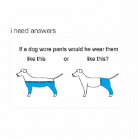 need to get up)..).)).).5?.?.!:$-$: i need answers  If a dog wore pants would he wear them  like this?  like this  or need to get up)..).)).).5?.?.!:$-$