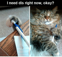 I Need Dis: I need dis right now, okay?  WWW.FUNCATPICTURES.COM