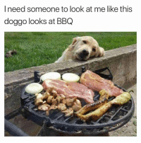 Dogs, Funny, and Love: I need someone to look at me like this  doggo looks at BBQ It is love at the first sights!! @dogsbeingbasic has amazing dogs memes
