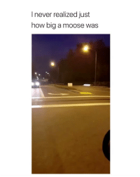 Omg, Twitter, and Girl Memes: I never realized just  how big a moose was omg? are you serious lmfao twitter: -‪Joshx13_ ‬