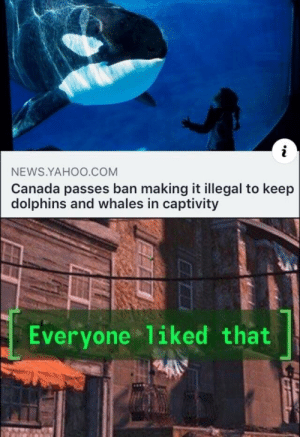 News, Reddit, and Canada: i  NEWS.YAHOO.COM  Canada passes ban making it illegal to keep  dolphins and whales in captivity  Everyone 1iked that  240 *happiness noise*
