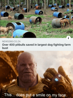 Dank, Memes, and Target: i  NEWS360.CO.ZA  Over 400 pitbulls saved in largest dog fighting farm  bust  This.. does put a smile on my face Saved boyes by GallowBoob MORE MEMES