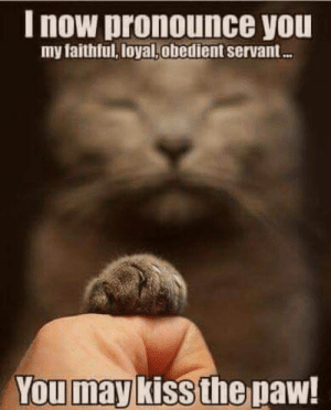 Memes, Kiss, and 🤖: I now pronounce you  my faithful, loyal,obedient servant  You may  kiss the paw! CAT Planet