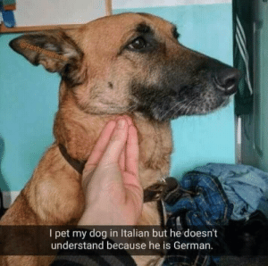 Dog, German, and Pet: I pet my dog in Italian but he doesn't  understand because he is German Fair enough
