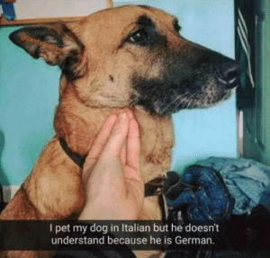 Animals, Dogs, and Memes: I pet my dog in Italian but he doesn't  understand because he is German. Dog Memes Of The Day 32 Pics – Ep35 #dogs #doglovers #lovelyanimalsworld - Lovely Animals World