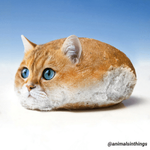 I photoshop animals into things. Here's a cat in a bread roll.: I photoshop animals into things. Here's a cat in a bread roll.