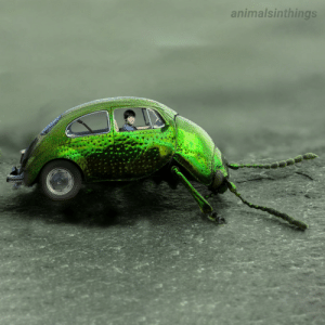 I photoshopped a beatle into a beetle into a beetle.: I photoshopped a beatle into a beetle into a beetle.