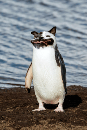 I photoshopped a dog's head onto a penguin: I photoshopped a dog's head onto a penguin
