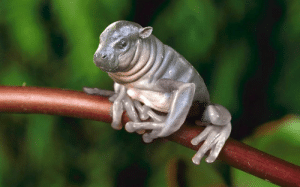I photoshopped a frog and a baby hippo: I photoshopped a frog and a baby hippo