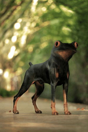 I photoshopped a frog and a dog together: I photoshopped a frog and a dog together