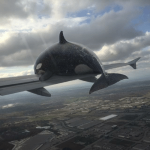 I photoshopped an Orca whale getting hit by a plane: I photoshopped an Orca whale getting hit by a plane