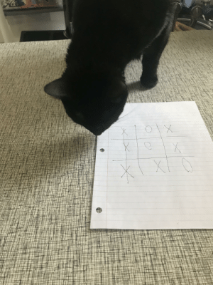 I Played Tic-Tac-Toe Against My Cat and I Lost (she had no control ate instantly ate all the treats, so I had to hurry and fill in her picks): I Played Tic-Tac-Toe Against My Cat and I Lost (she had no control ate instantly ate all the treats, so I had to hurry and fill in her picks)