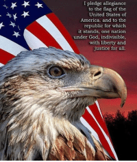 America, God, and Memes: I pledge allegiance  to the flag of the  United States of  America. and to the  republic for which  it stands, one nation  under God, indivisible,  with liberty and  justice for all merica america eagle pledge usa