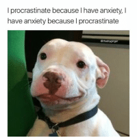 Memes, Anxiety, and Procrastination: I procrastinate because have anxiety, I  have anxiety because I procrastinate  @thedryginger Go follow @chaos.reigns_ now for the best animal memes on the gram @chaos.reigns_