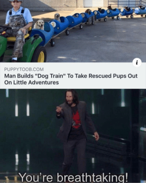 "Memes, Tumblr, and Blog: i  PUPPYTOOB.COM  Man Builds ""Dog Train"" To Take Rescued Pups Out  On Little Adventures  You're breathtaking! 30-minute-memes:  They are all breathtaking pups too"
