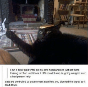 r/CatsAren'tReal? by KingCandy610 MORE MEMES: I put a bit of gold tinfoil on my cats head and she just sat there  looking terrified until i took it off i couldnt stop laughing omfg im such  a bad person help  cats are controlled by government satellites. you blocked the signal so it  shut down. r/CatsAren'tReal? by KingCandy610 MORE MEMES