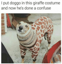 Aww 😂 memes memesdaily lol lmfao love like followme for dankmemes funnypics pettypost realshit nochill flatlined noharmdone igers instagood instalike instagram instadaily likeforlike like4like likes doggo dogsofinsta pupper dog: I put doggo in this giraffe costume  and now he's done a confuse Aww 😂 memes memesdaily lol lmfao love like followme for dankmemes funnypics pettypost realshit nochill flatlined noharmdone igers instagood instalike instagram instadaily likeforlike like4like likes doggo dogsofinsta pupper dog