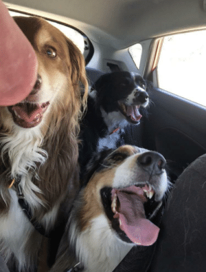 I put my dog in day care for the first time this week. Here's a photo of Coco (back) and her new friends on their way to the dog park. I was nervous about how she would get along with the others, but since I received this photo, I'm not so worried anymore!: I put my dog in day care for the first time this week. Here's a photo of Coco (back) and her new friends on their way to the dog park. I was nervous about how she would get along with the others, but since I received this photo, I'm not so worried anymore!