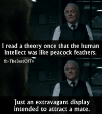 Memes, Peacock, and 🤖: I read a theory once that the human  intellect was like peacock feathers.  fb/The BestOfTv  Just an extravagant display  intended to attract a mate. Westworld